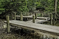 A pier that leads to a path in the woods stone Royalty Free Stock Images