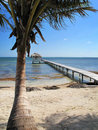 Pier & Palm along the Shore Royalty Free Stock Photo