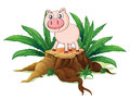 A pig above a trunk illustration of on white background Royalty Free Stock Images