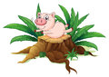 A pig balancing above a wood illustration of on white background Royalty Free Stock Photo