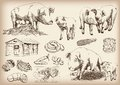 Pig breeding set of vector sketches on a white background Royalty Free Stock Photos