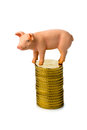 Pig on coins Stock Photos