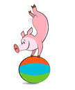 Pig exercising with a pilates ball funny Stock Photo