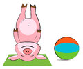 Pig exercising with a pilates ball funny Stock Photography