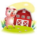 A pig at the farm pointing the barnhouse illustration of on white background Royalty Free Stock Photos