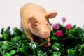 Pig in the flowers a plastic grass Royalty Free Stock Photos