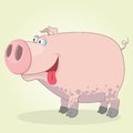 Pig illustration of cartoon for web design Stock Images