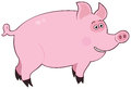 Pig pink funny cartoon cute Royalty Free Stock Photography
