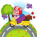 Pig riding a scooter Royalty Free Stock Photo