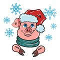 A pig in a Santa Claus hat is watching the falling snow. Merry Christmas pig icon. Year of the pig. Happy new year 2019.