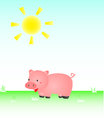 Pig In The Sun Stock Photography