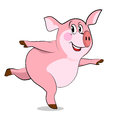 Pig  in yoga poses. Stock Photo