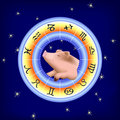 Pig In Zodiac Wheel Royalty Free Stock Photography