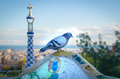 Pigeon in the antoni gaudi park details of a colorful ceramic at parc guell designed by barcelona spain Royalty Free Stock Photo
