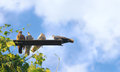 Pigeon birds sitting with blue sky clouds on background Royalty Free Stock Photos
