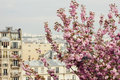 Pigeon on blossom cherry tree city background Royalty Free Stock Images