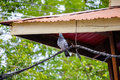 Pigeon cache on electric line Royalty Free Stock Photo