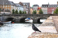 Pigeon in Copenhagen Royalty Free Stock Image