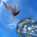 Pigeon dove flying over earth blue sky and clouds background Stock Image