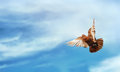 Pigeon flying blue sky freedom concept background Stock Photography