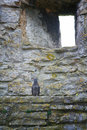 Pigeon on ledge grey sitting a medieval castle wall with a small arrow loop or window in the wall visby city wall sweden Royalty Free Stock Images