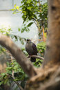 Pigeon resting on branch a gray a of a tree Stock Photos
