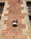 Pigeon rests on old Town Hall in Gdansk, Poland Royalty Free Stock Photo