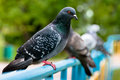 Pigeon sitting on support in park Stock Images
