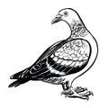 Pigeon, vector hand drawn illustration.