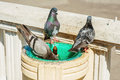 Pigeons bathe and drink from the fountain three a small Stock Image