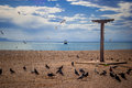 Pigeons beach eating under strong blue sky Royalty Free Stock Images
