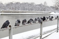 Pigeons on bridge railings Krakow, Poland Royalty Free Stock Photography