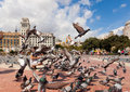 Pigeons at catalonia square barcelona september on september in barcelona some of most important streets and Stock Photo