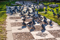 Pigeons on the city square Stock Images