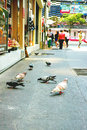 Pigeons feeding on a city street where people are walking by and shopping Stock Photos