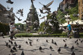 Pigeons flying at unirii square in timisoara romania timisora may on may Royalty Free Stock Photos