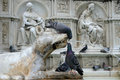 Pigeons on fonte gaia siena drinking water from a marble statue the fountain italy Stock Images