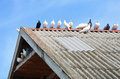 Pigeons many on the roof Royalty Free Stock Photography