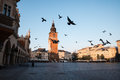 Pigeons in the morning krakow main market square poland europe Stock Photos