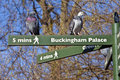 Pigeons on pedestrian signposts in london some londons st jamess park Royalty Free Stock Photo