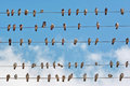 Pigeons placed on electric wires many of the electricity grid Royalty Free Stock Images