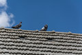 Pigeons on the roof Royalty Free Stock Photo