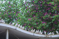 Pigeons on rooftop a row of with redbud flowers roof Royalty Free Stock Photos