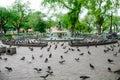 Pigeons at sanam luang bangkok thailand Stock Photography