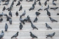 Pigeons on steps staying the Stock Photo
