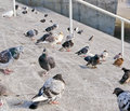 Pigeons on stone steps Stock Photography