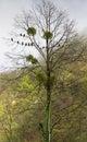 Pigeons on a tree
