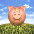 Piggy bank dollar with eyes money sign on the grass Stock Photography