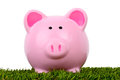 Piggy bank grass always greener sat in some perfect green and isolated in a white background Stock Image