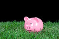 Piggy bank in grass at night Royalty Free Stock Photos